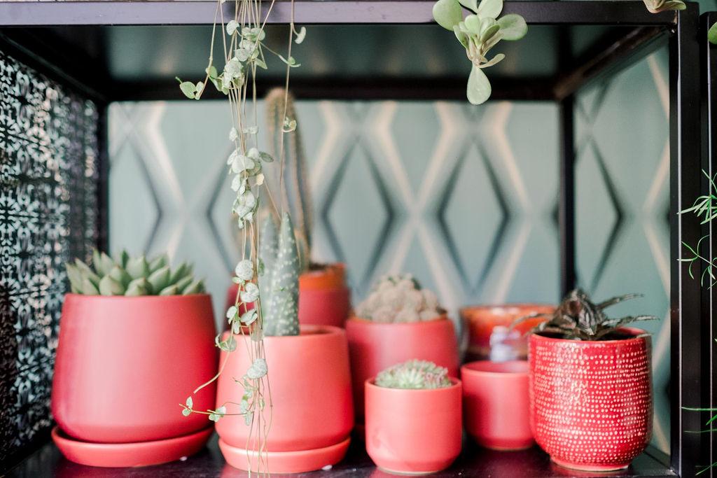 cactus bruxelles