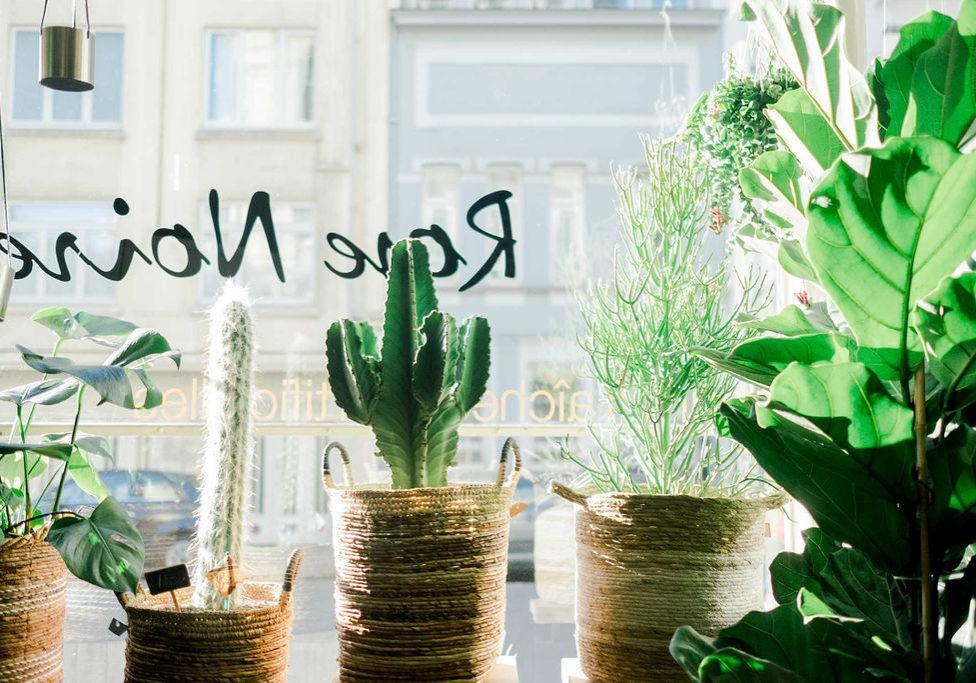 cactus fleuriste ixeles